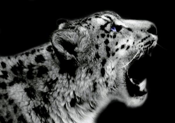 Big Mouth Blue Eyes by alexkerr