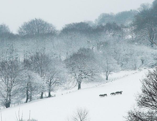 Snow Trek by DP_Imagery