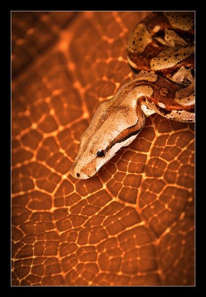 Camouflage II by solkku