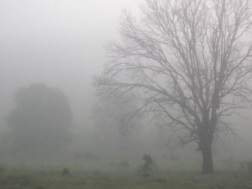 Misty by aussielass