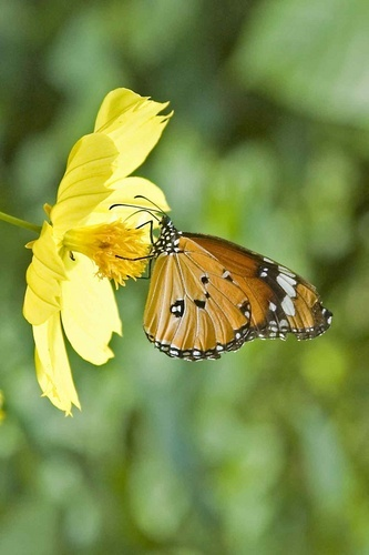 butterfly on a flower 2 by mariner