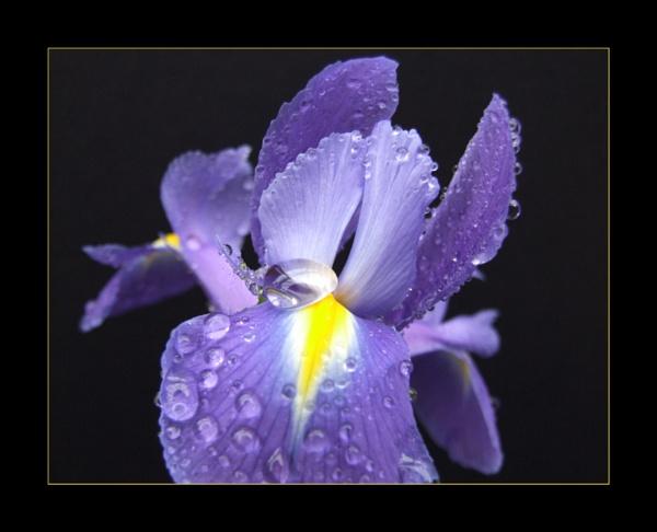 flower 136 by lizziew