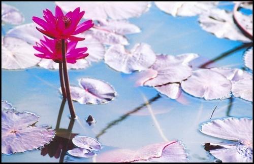 Pink and silvery by rajasekaranamie