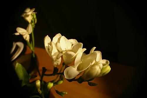 Flowers? by MichaelSingleto
