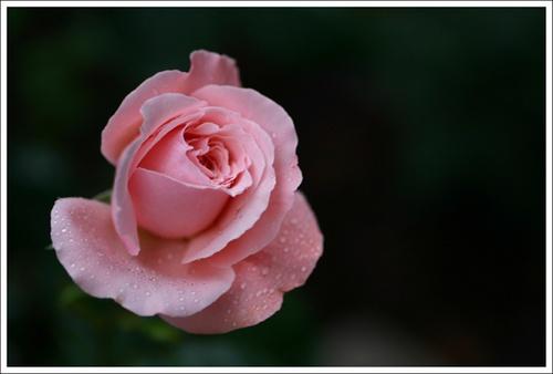Rose Garden by sherlob
