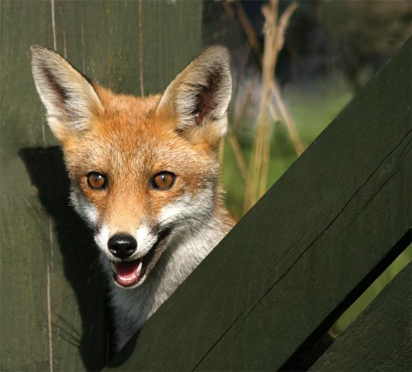 Cheeky Fella by bassan