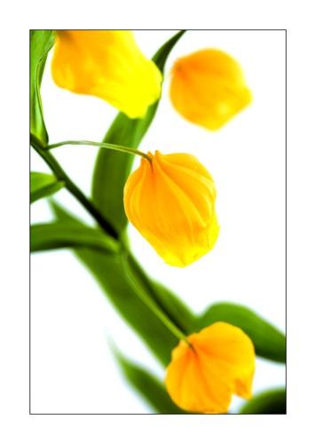 Golden Bells by trahern