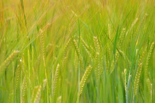 Green Pastures by sarah kruger