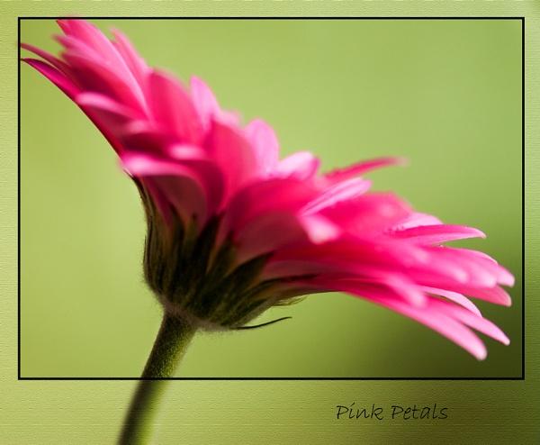 pink petals by christabella