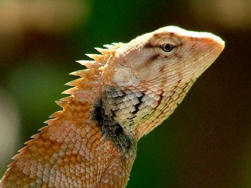chameleon by sasam