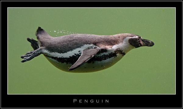 Penguin by ejtumman