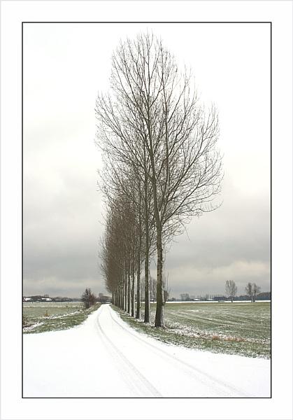 Those Trees Again by conrad