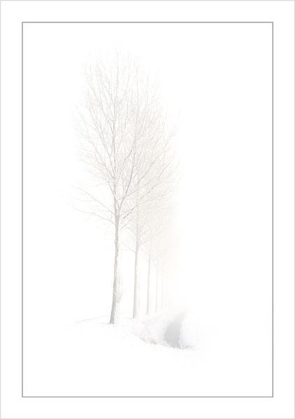 Those Trees Again 2 by conrad