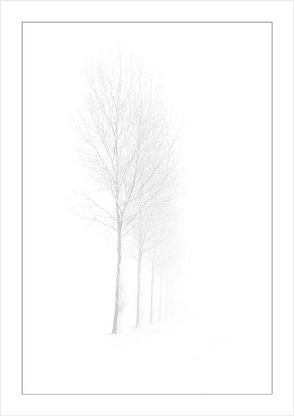 Those Trees Again 3 by conrad