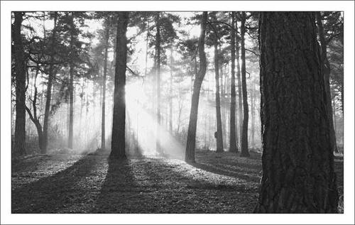 sunray B&W by lensman