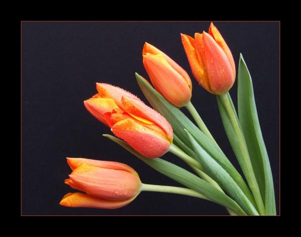 flower 137 by lizziew