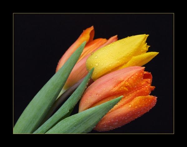 flower 138 by lizziew