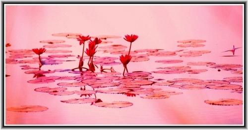 Red pond by rajasekaranamie