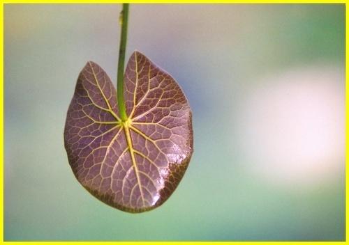 Leaf of lily by rajasekaranamie