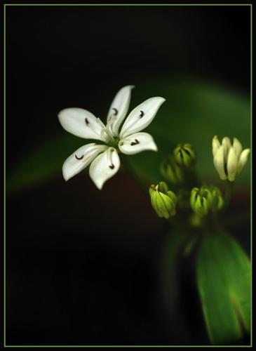 Bush Flower by CollY