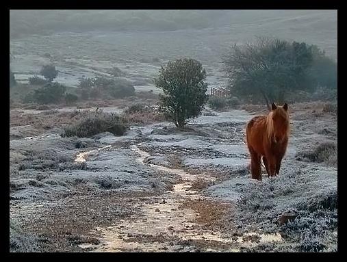 Forest Pony by DPWeeks