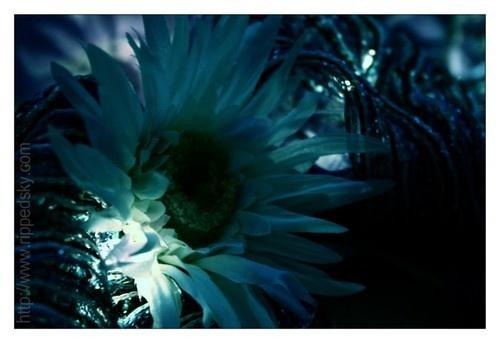 L\'amour Sombre by bleedingstar