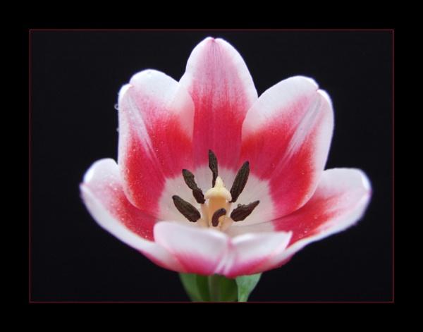 flower 139 by lizziew