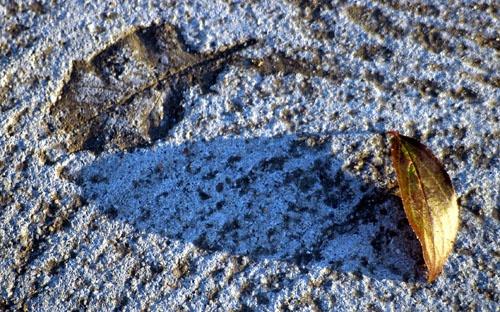 Concrete Leaf by ArtemusDom