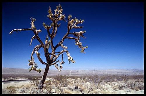 Mojave by sjatkinson