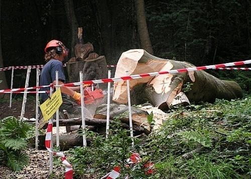 Tree Sculptor at Work by cbegg