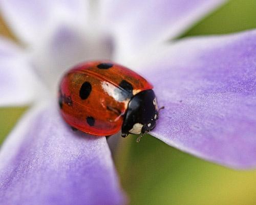 Ladybird by Max_WW