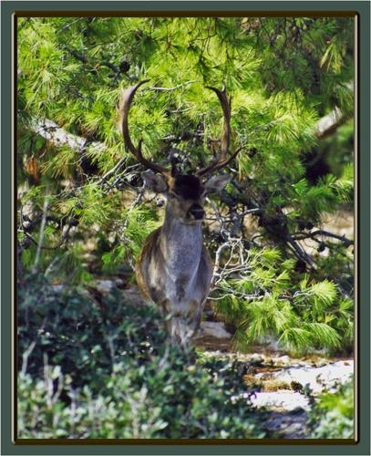 Moni Deer by JCowlan