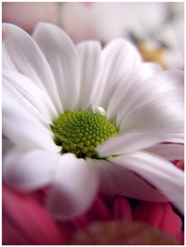 Spring\'s Love by anubiskitten100