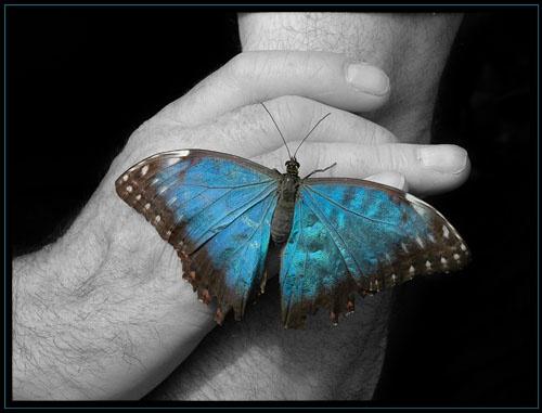 Butterfly Blue\'s by AlleyCatz