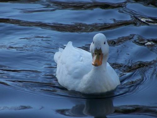 Duck ! by mark2uk