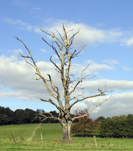 deadtree by john ballance