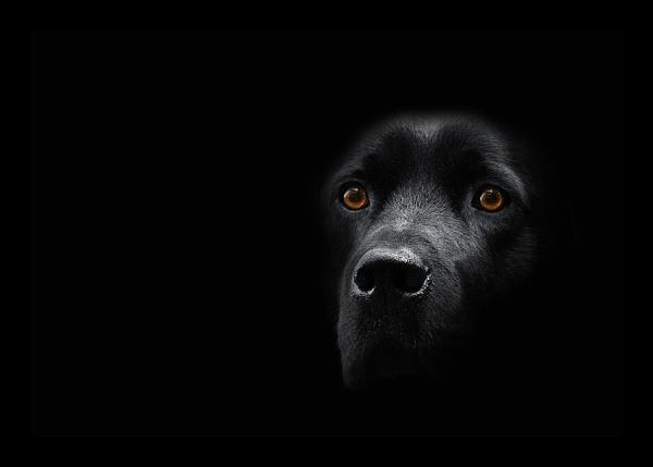 Back In Black by MartinWait