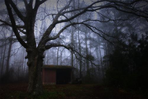 Old Shed In Fog by sarah kruger