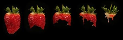 Strawberry Yum Yum! by robporter