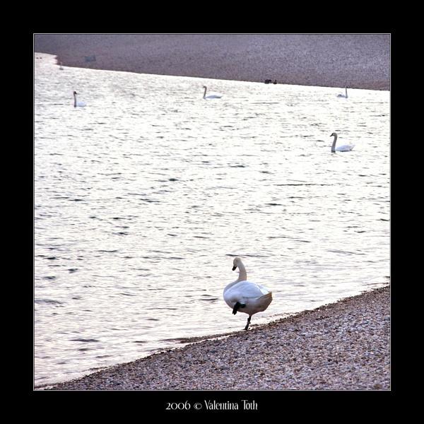 swan world by yuno