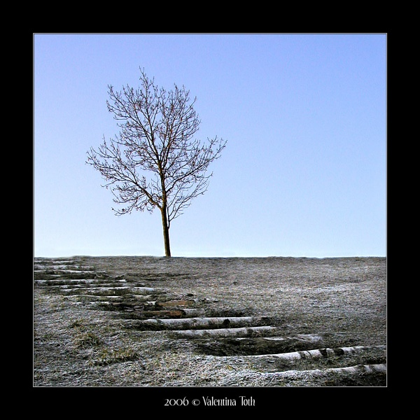 Another Lone Tree by yuno