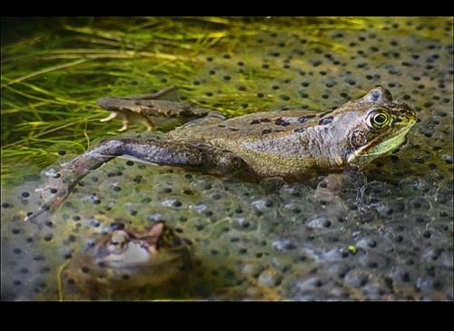 Pond Life by RichardB