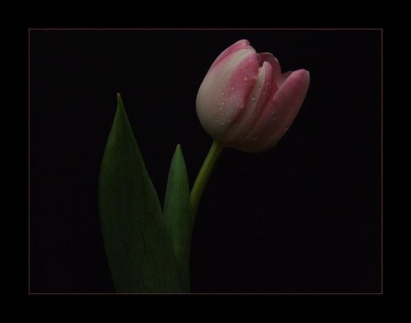 flower 140 by lizziew