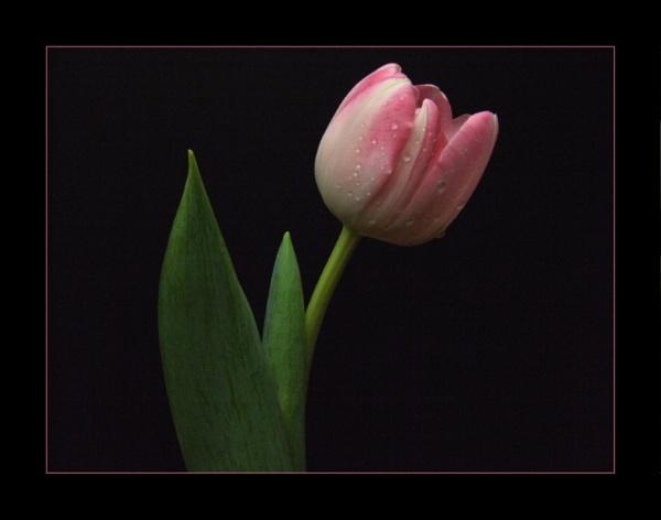 flower 141 by lizziew