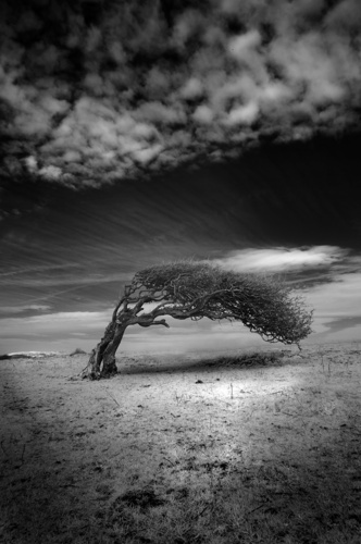 Ir Tree by SonyJohnnie