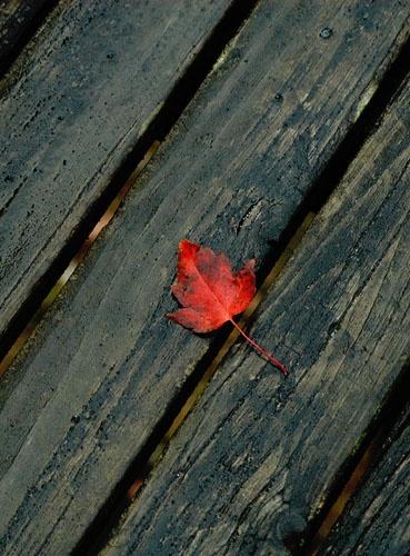 Hopefully the last leaf by ArtemusDom