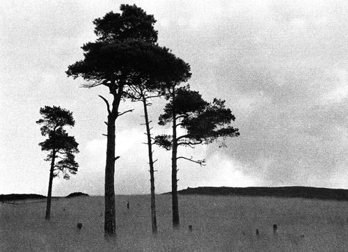 Dovestones by WalterBrooks