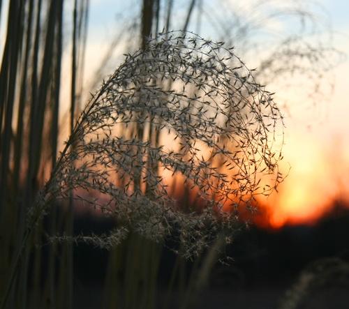 Spring Grass by robertb