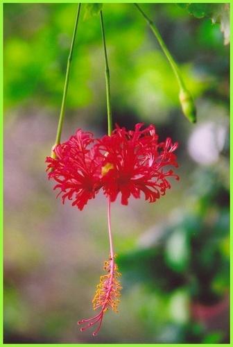 flower by rajasekaranamie