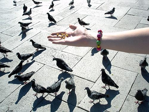 Feeding time... by Rob